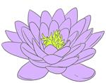 lotus3_soft