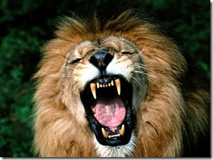 Remember, a lion is a lion because he roars