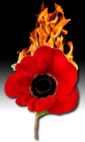 A Burning Poppy