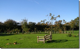 Memorial Woodlands