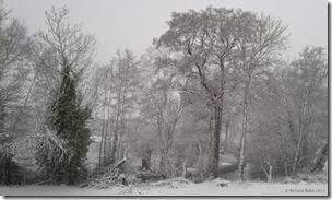Winter Wonderland - click to view full size image