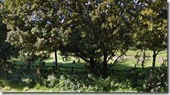 Upton Cemetery - Poole
